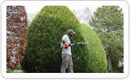 Shrub Pruning CT